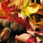 Autumn | Acupuncture | Zero Balancing | Cambridge | Tree of Life Therapy | Rosanna Price