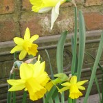 Ready For Spring? | Acupuncture | Zero Balancing | Cambridge | Tree of Life Therapy | Rosanna Price