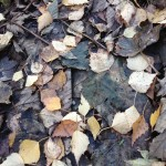 Autumn Leaves | Acupuncture | Zero Balancing | Cambridge | Tree of Life Therapy | Rosanna Price