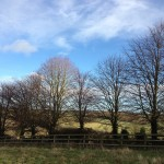 Bare Trees | Acupuncture | Zero Balancing | Cambridge | Tree of Life Therapy | Rosanna Price